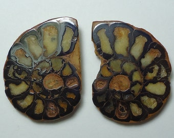 AMMONITE Natural Polished Fossil Slices Pair From Morocco Sale