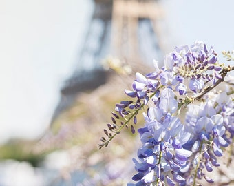 Paris Photography - Eiffel Tower with Wisteria Blossoms, Spring in Paris, Travel Fine Art Photograph, Large Wall Art