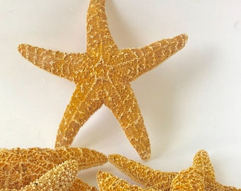 Starfish - 1 Extra Large Natural Sugar Starfish *Top Quality* Beach Decor Star Fish Bulk Beach Wedding Coastal Nautical Real Starfish