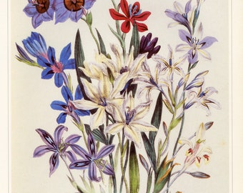 Jane Loudon Flowers Plant Book Plate SALE~~Buy 3, get 1 free