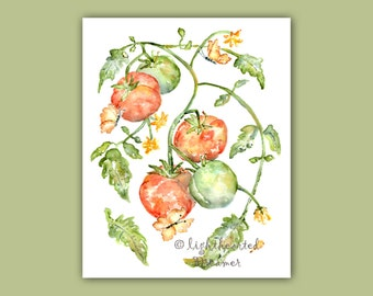 Tomato, kitchen art, Tomato print, Kitchen Watercolor, Kitchen Painting, Gift for Gardener, Print for Kitchen, Fruit Watercolor Painting