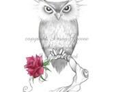 owl with rose original art print 8.5x11