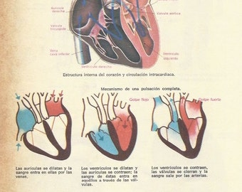 2 Vintage ANATOMY Poster - Double sided antique original print from Spain