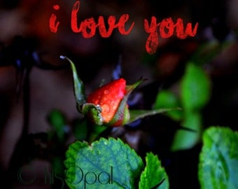 digital download nature photography: rosebud 4 Typography Photo, Love Home Decor,rosebud, red home decor, red rose photo, Valentine's Day