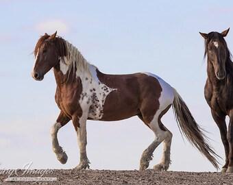 Tango's Dance - Fine Art Wild Horse Photograph - Wild Horse - Sand Wash Basin