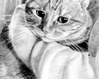 Tabby Cat Art, Tabby Cat Print, Tabby Pencil Drawing, Cat Art, Cat Print, Tabby BW Drawing, Cat Drawing by P. Tarlow
