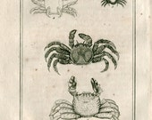 1802  Antique Print Crustaceans  Latreille, Buffon