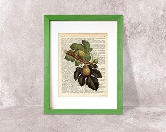 Figs fruit dictionary print-Kitchen wall art-Figs art print-Figs on book page-Botany print-wedding print-figs art print-NATURA PICTA-DP002