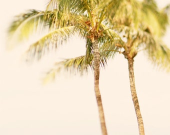 Palm Tree Photo Print for Palm Tree Décor in 6 Sizes