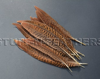 Golden pheasant feathers, natural brown loose real feathers for millinery, crafts, weddings, table setting / 6-8 in (15-20 cm) long / F179-6