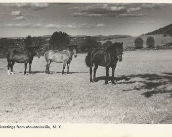 Mountainville Life - Vintage 1950s Pastured Horses Real Photo Greeting Postcard