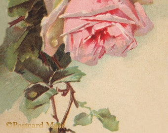 Pink Klein Rose - New 4x6 Photo Print From A Vintage Postcard FF004