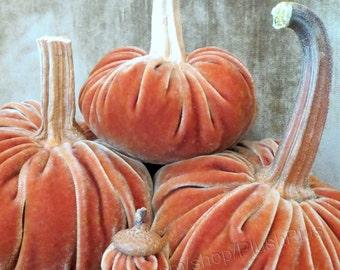 Velvet PUMPKINS & Velvet ACORNS - Real Pumpkin Stems and Real Acorn Caps - Burnt Orange