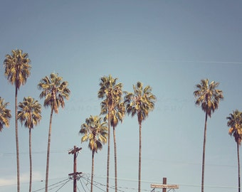 Los Angeles Photography, Highland Park Photograph, York BLVD, California Print, Palm Tree decor, boho, bohemian print, travel photography