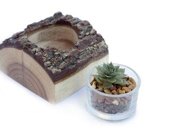 Live Succulent and Walnut Planter Set
