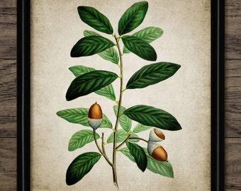 Acorn Print - Oak Tree Illustration - Acorn Art - Oak Tree Acorn - Digital Art - Printable Art - Single Print #150 - INSTANT DOWNLOAD