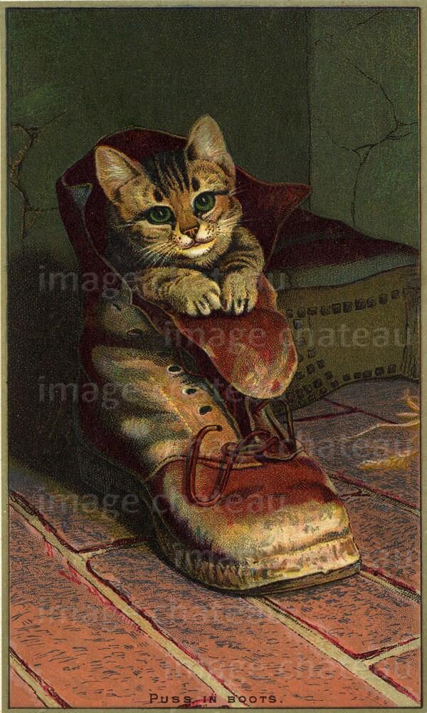 Puss in boots eyes kitten