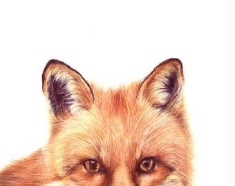 fox art - fox print - art prints - fox illustration - fox - kids art - nursery art prints - woodland creatures