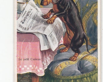 Tres Chic Antique Interior Intelligent Dachshund Dog Reading Newspaper Antique Postcard Le Petit Curieux Great Imagery