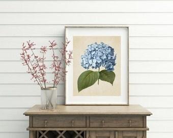 Hydrangea Print, Printable, digital download, hydrangea, botanical print, botanical prints, home decor, art prints, printable art, wall art