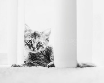Cat Photography - Curious Cat Photo - Kitten Print - Torby Photo Print Black and White- Photography - Black and White Cat Photography - Cute
