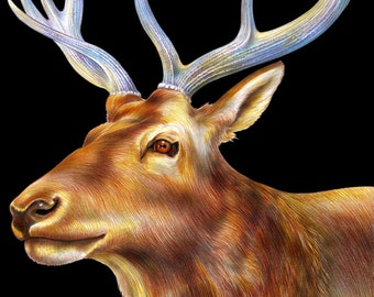 Elk Colored Pencil Drawing