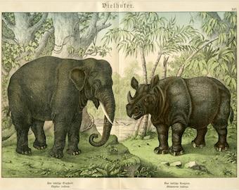 "1880 Matted Elephant & Rhino Antique Print - Schubert Folio Chromolithograph Wall Art, Animal Decor, Gift - 16x20"""