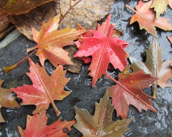 Vintage Brass Maple Leaves In New England Fall  Colors