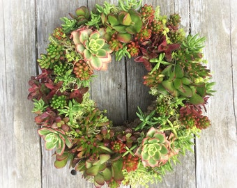 "Special Red Colors - 13"" Succulent Wreath"