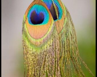 Earrings peacock feathers - Style Hippie, Boho Chic, Bohemian, LaVern