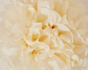 French Vanilla Paper Pom Pom