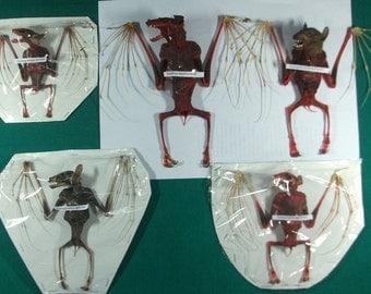 Taxidermy fruitbat mummified bloody bats lots 5 species