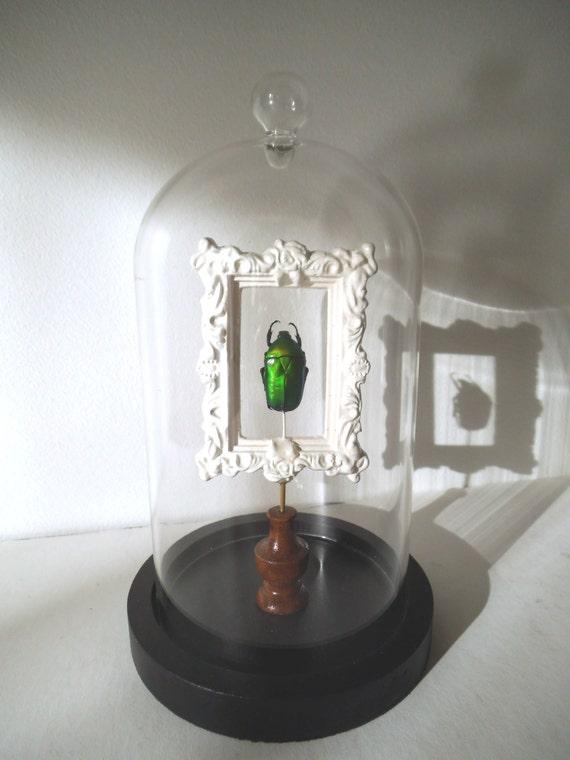 Globe cabinet de curiosit insecte cetonidae - Globe cabinet de curiosite ...
