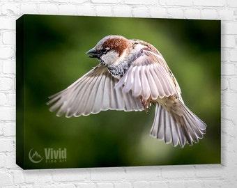 Small bird canvas art, sparrow photo, ready to hang, sparrow canvas print, woodland wall decor, bird photography, wild bird canvas small