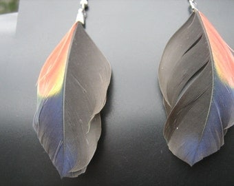Earrings colorful parrot feather earrings