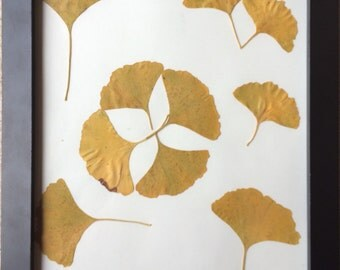 Decorative arrangement of autumn ginkgo biloba leaves