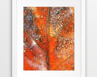 Leaf Print, Fall Leaf Wall Art, Leaf Photo Orange Ochre, Fall Decor, Autumn Wall Art, Abstract, Modern, Home Decor, Digital Printable Art