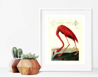Flamingo Print, Flamingo Wall Art, Flamingo Print Art, Printable Flamingo, Nature Lover Gift, Flamingo Instant Download, Flamingo Wall Print