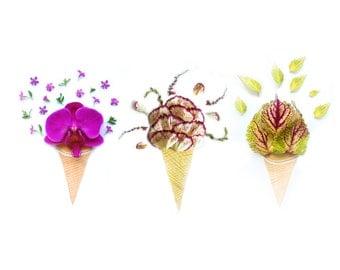 Three Flowers Ice Cream Cones - Wall print