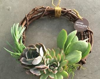 SUCCULENT/Potted Succulents/Succulent Arrangement/Succulent Centerpiece/Succulent Gift in Grapevine Succulent Wreath (8 inch Diameter)