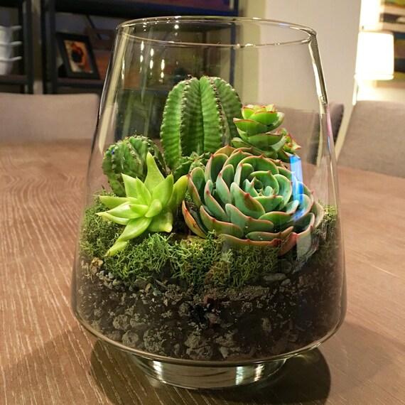 pot de plantes grasses plantes par pottedsucculents sur etsy. Black Bedroom Furniture Sets. Home Design Ideas