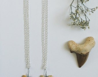 Fossil Shark Tooth Necklace.