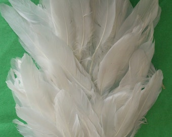 White Quill Craft Feathers