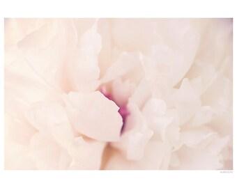 Nature Photography PRINT, Pale Pink Peony - 3, Wall Art