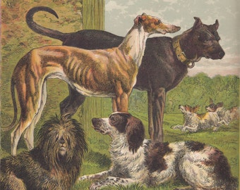 Antique Dogs Lithograph Spaniel Dog Greyhound Dog Skye Terrier Dog Great Dane Dog Art Print 1875