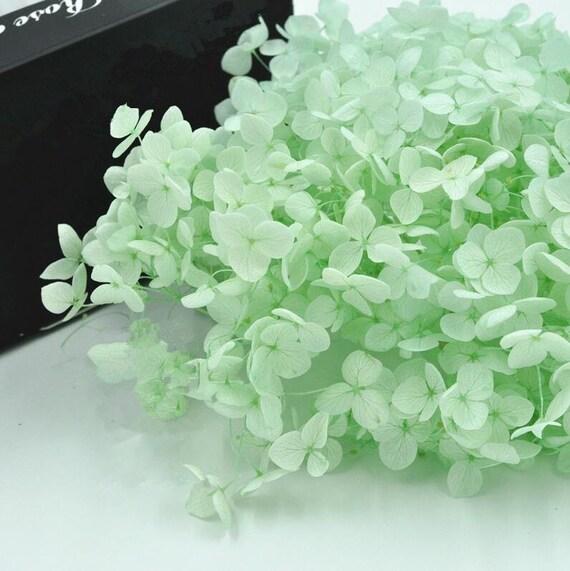 preserved fresh flower mint green fresh dried flowers diy flower beautiful high quality flower diy 3g from on etsy studio