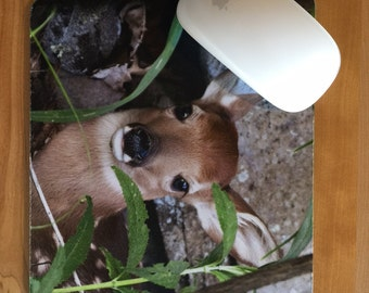Baby deer mousepad