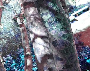 Cammo Tree 8x10 Glossy Print