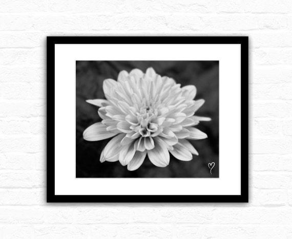 "Black and White Wall Art, Dahlia in Black and White, Flower Art, Art Print, Dahlia, Home Decor, Black and White Photograph ""Timeless Dahlia"""
