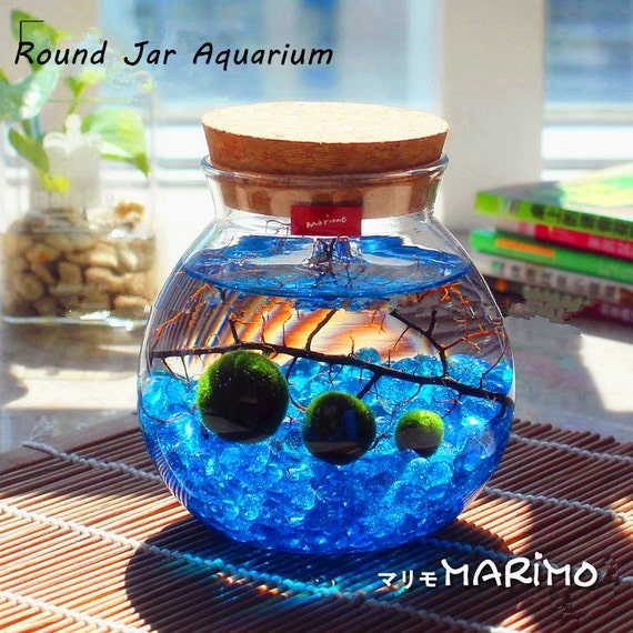"Gift Guide for Nature Lovers - International Shipping. Marimo aquarium kit with 4.4"" LED light globe terrarium/3 moss balls/blue glass gravels/sea fan-office desk decorate. Unique living nature gift."